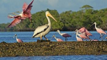 Safari fotográfico y avistamiento de aves privado por los Everglades