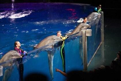 Georgia Aquarium Admission Ticket