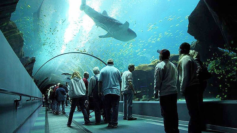 Guests traverse the shark tunnel as a giant whale shark cruises overhead