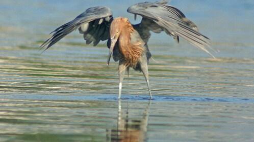 Grey bird in the everglades