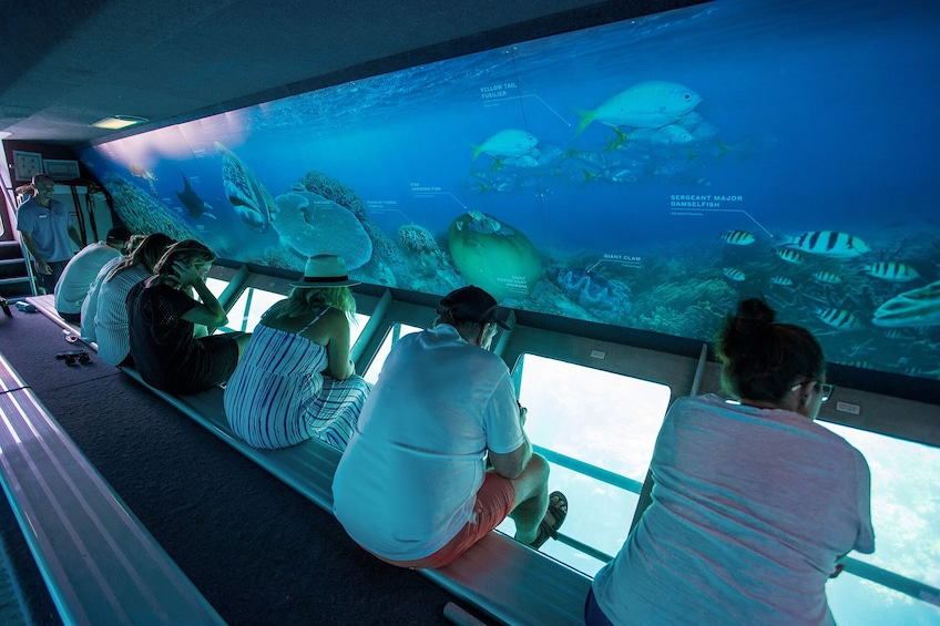 Show item 5 of 7. Great Barrier Reef Day Cruise to Reefworld