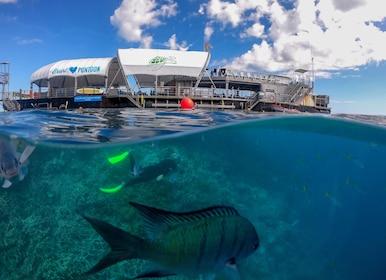Great Barrier Reef Adventure 2_web.jpg