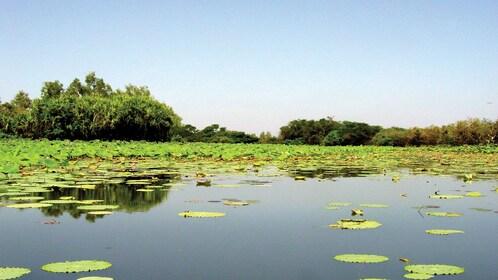 pond in darwin