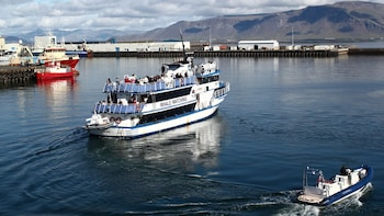 Half-Day Whale-Watching Cruise in Faxaflói Bay