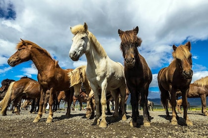 Horse Riding & Golden Circle Full-Day Tour