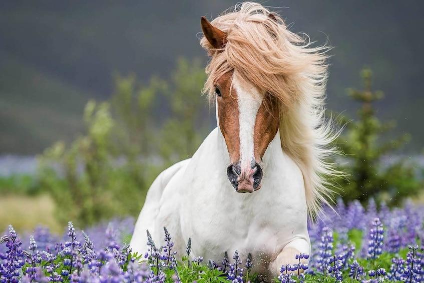 Indlæs billede 10 af 10. Horse Riding & Golden Circle Full-Day Tour