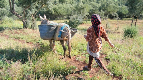 Local woman on a trail with a mule in Marrakech