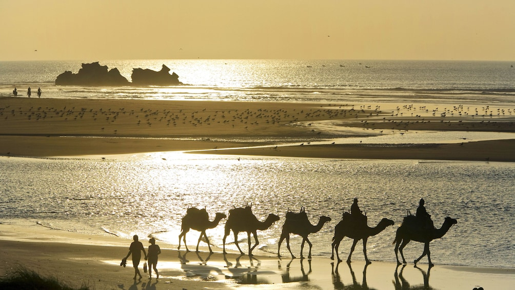 Charger l'élément 3 sur 6. Silhouette of camel riding group on the beach in Essaouira