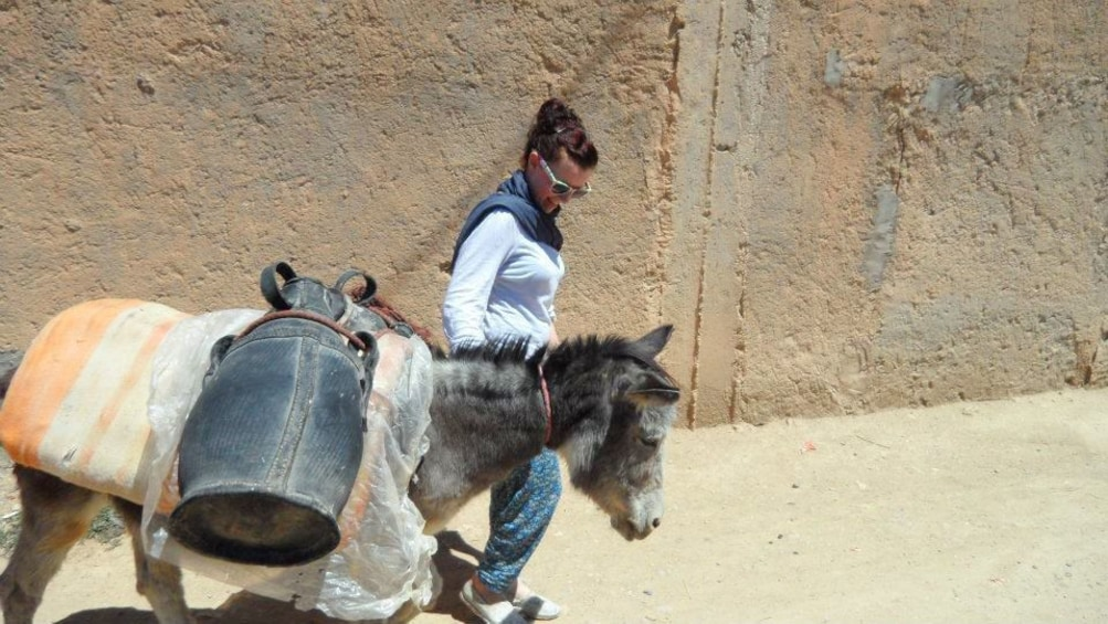 Charger l'élément 3 sur 5. Woman leading a donkey in a Berber Village in Morocco