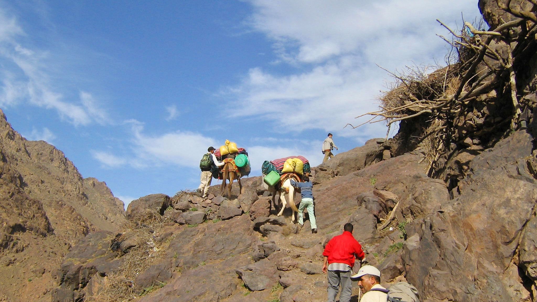 Hiking group with mules ascending the Atlas Mountains in Marrakech