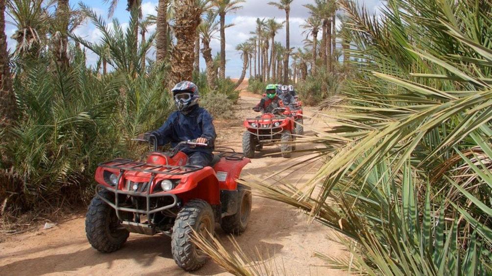 Apri foto 2 di 5. Quad-biking group on a path through a palm grove in Marrakech