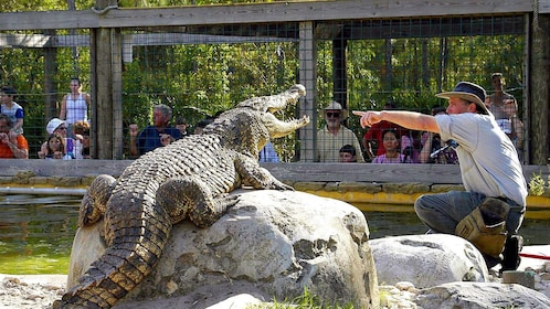Alligator show with animal handler at Gatorland in Orlando.