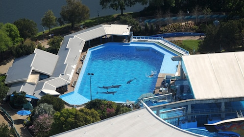 Orca whales in tank as seen from a helicopter in Orlando.