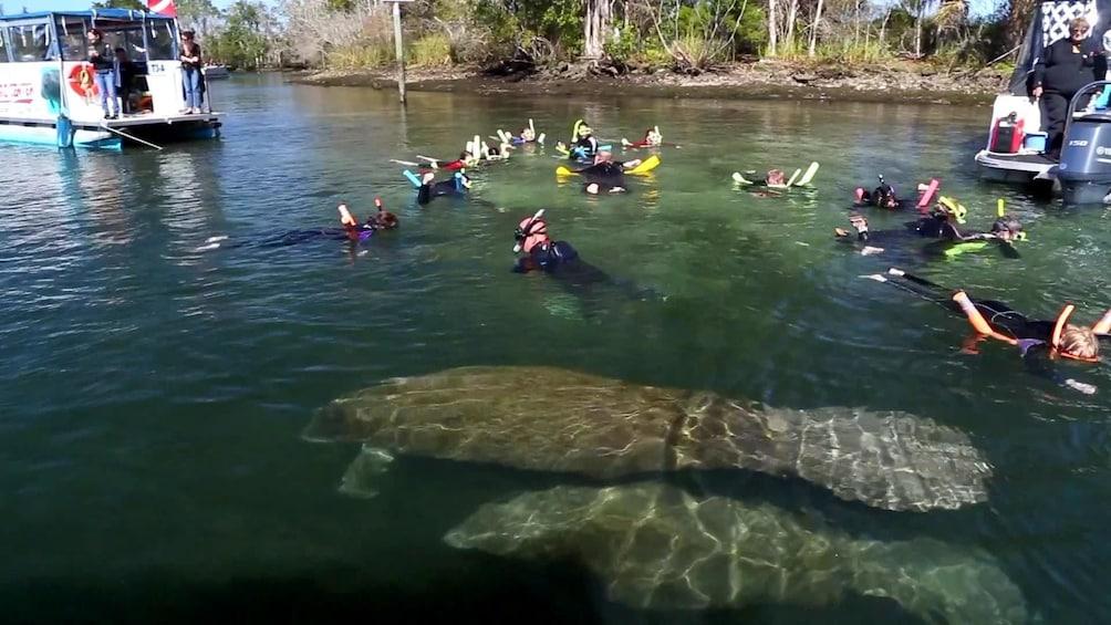 Carregar foto 1 de 10. Florida Manatee Adventure & Airboat Ride