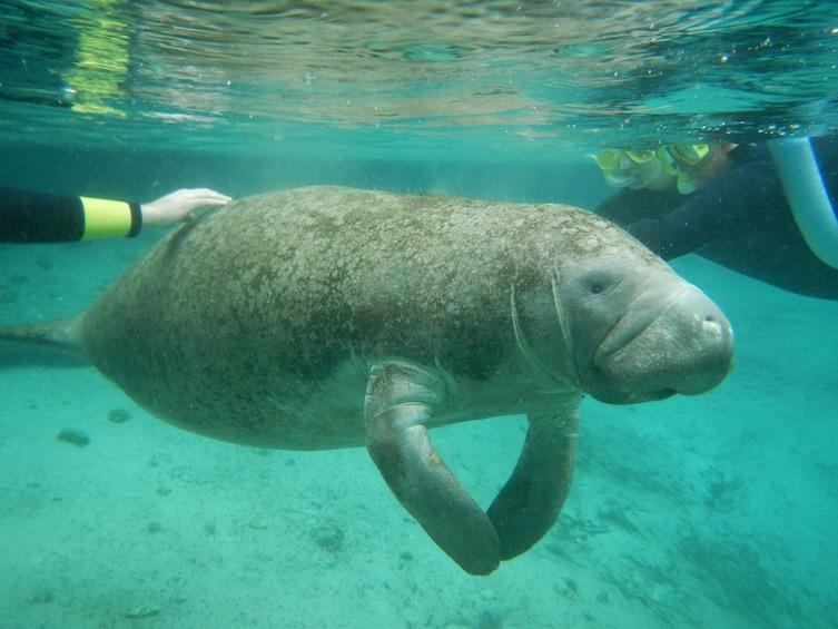 Carregar foto 3 de 10. Florida Manatee Adventure & Airboat Ride