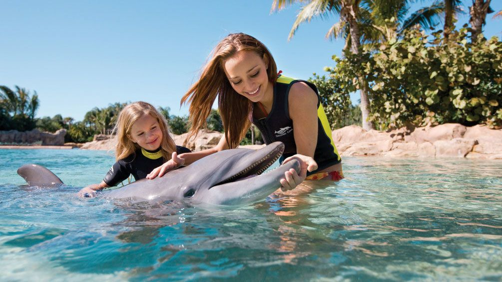 Dolphin interaction with mother and child in Orlando.