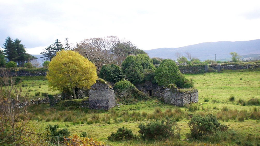 Show item 4 of 7. Old structure reclaimed by nature in Ireland