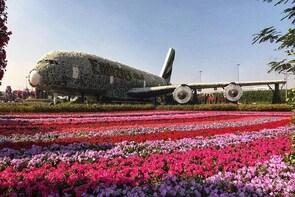 Dubai Miracle Garden Ticket with Transfer