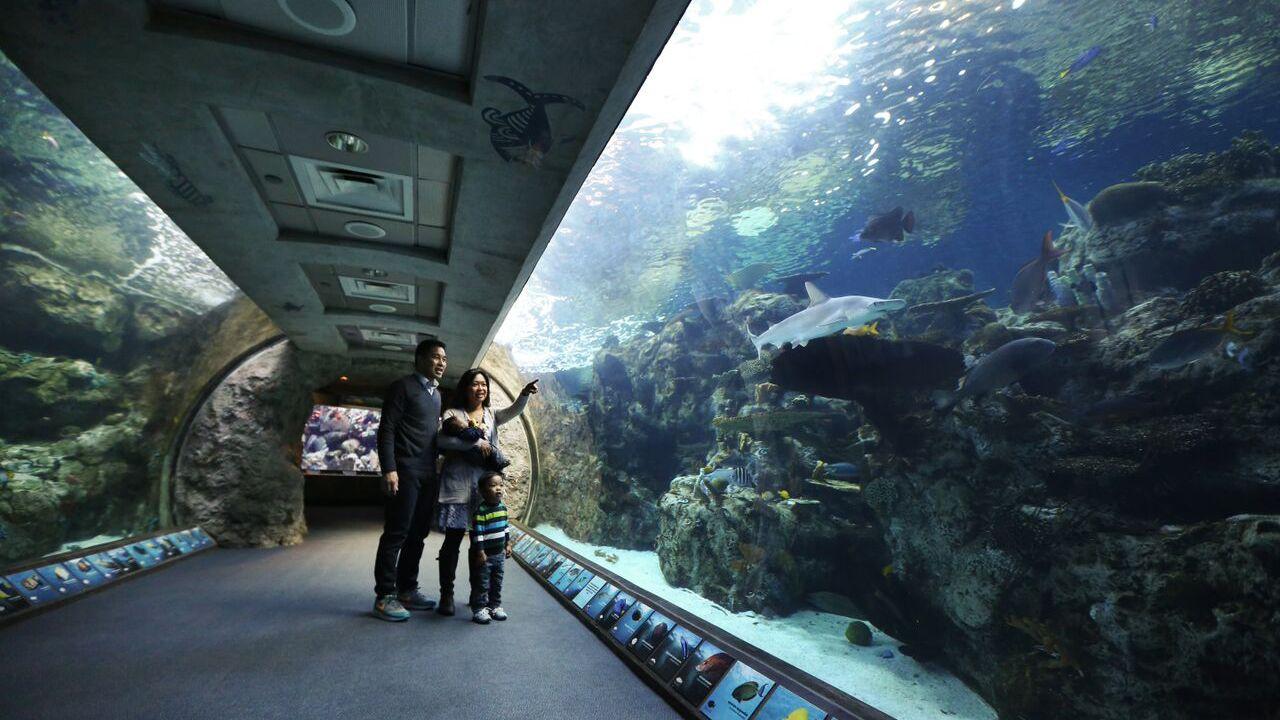 Tickets für das Aquarium of the Pacific