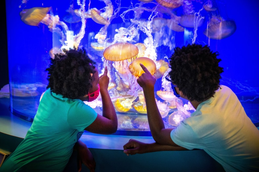 Aquarium of the Pacific Timed Tickets