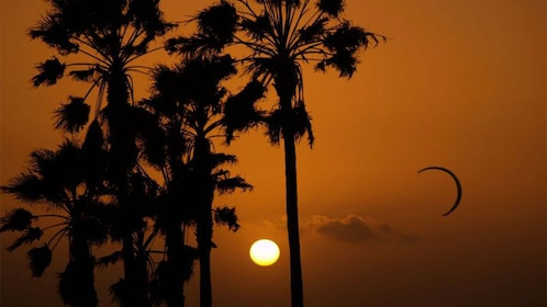 Sunset with palm trees in California.