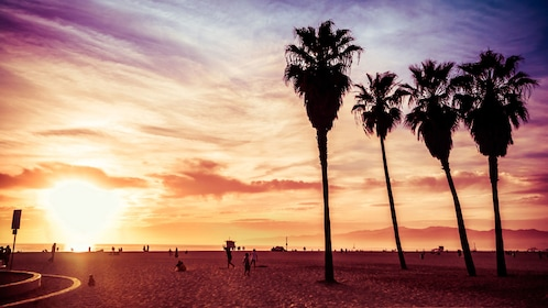Los Angeles beach and palm trees at sunset.