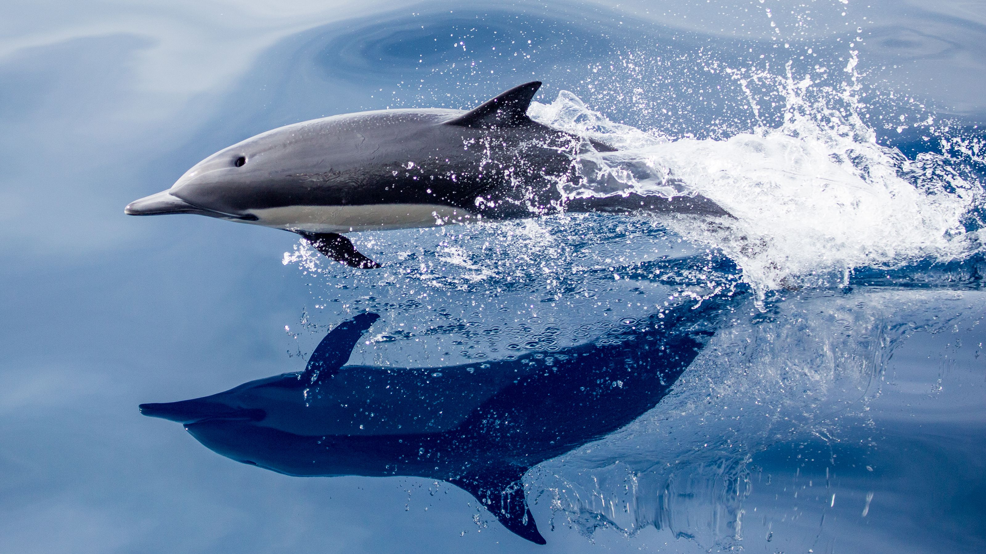 A dolphin leaping from the ocean.