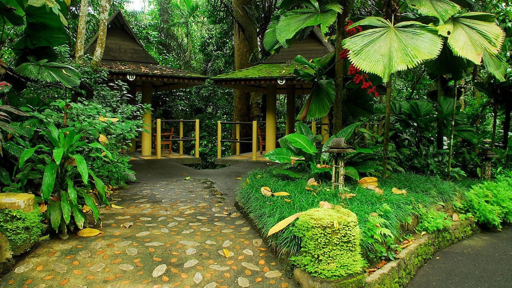 Show item 6 of 6. Lush trees and foliage line the walkways at Hidden Valley Resort