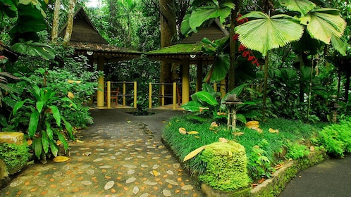Lush trees and foliage line the walkways at Hidden Valley Resort
