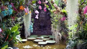 Ischia Island & Mortella Gardens Tour