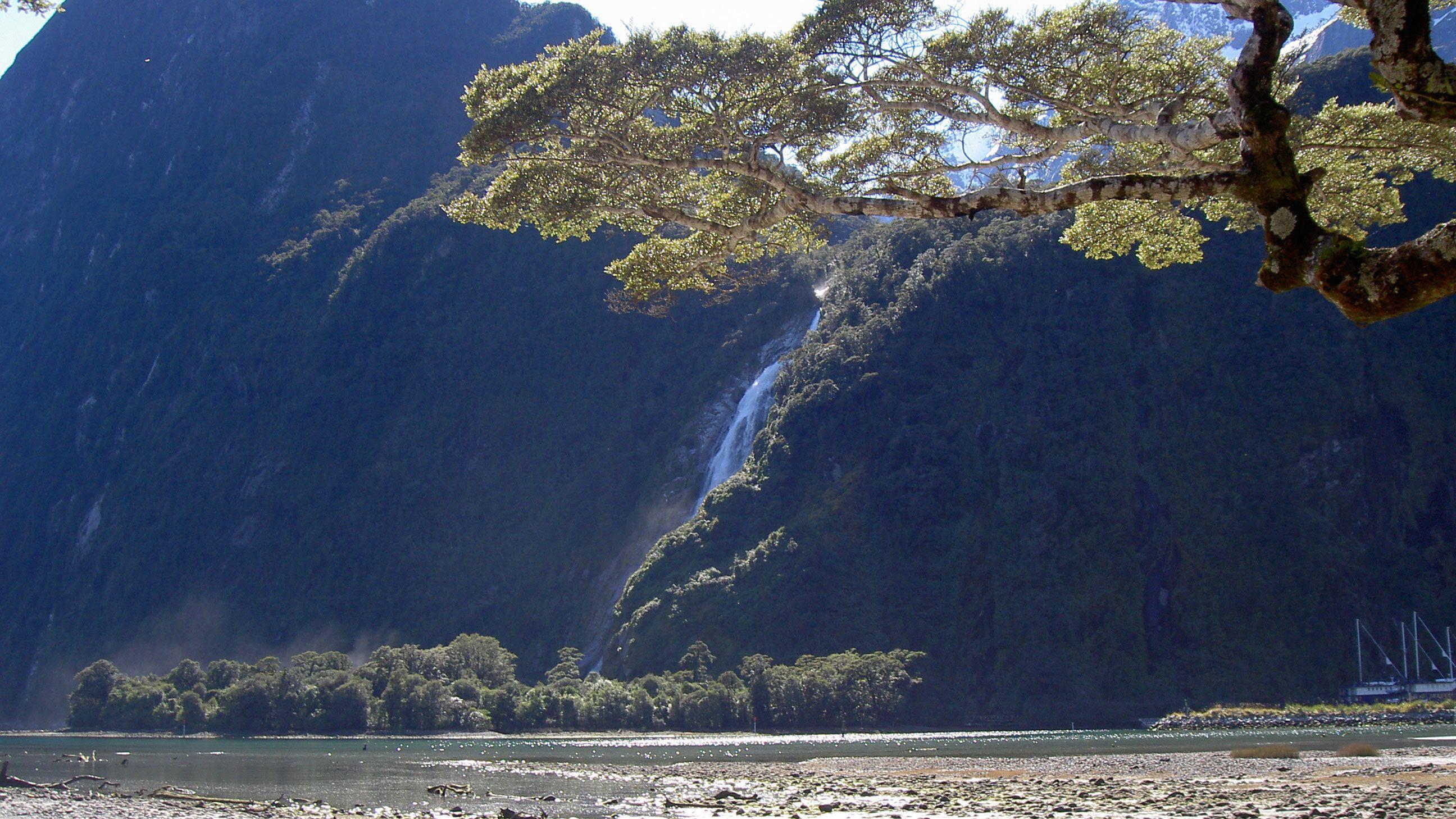 Mountain and tree next to a lake