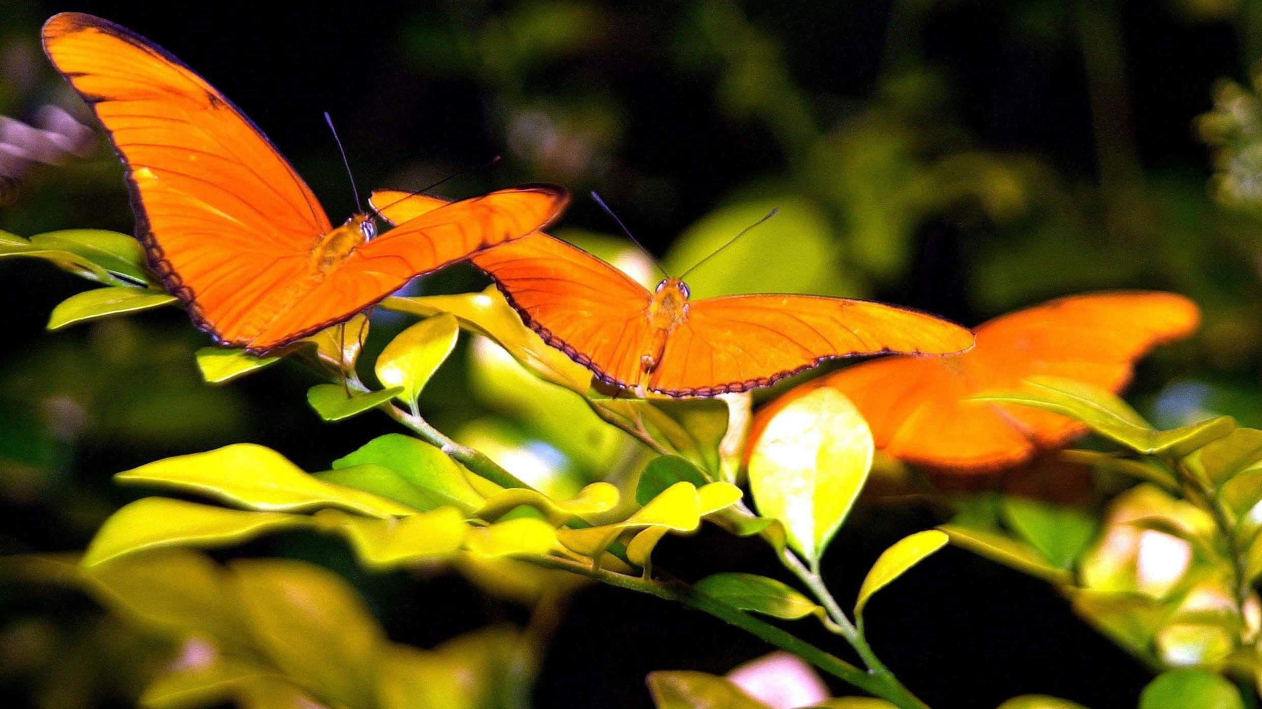 Orange butterflies perched on leaves at American Museum of Natural History in New York