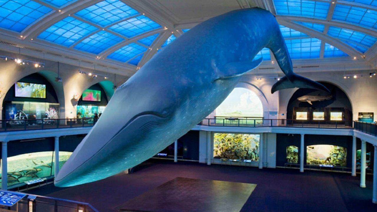 df.blue-whale_smalldynamiclead_wideexact_1230.jpg