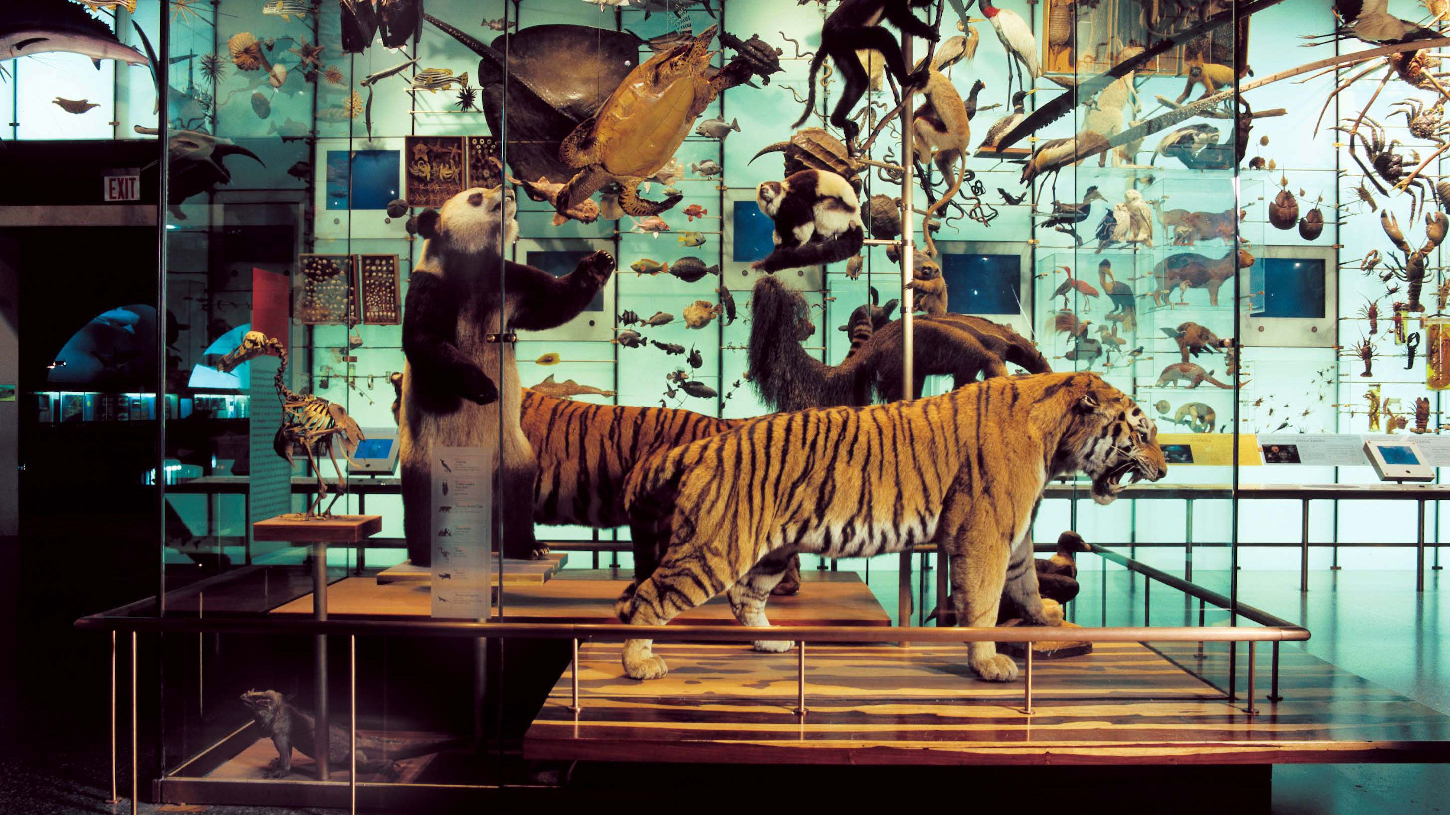 Display of animals at American Museum of Natural History in New York