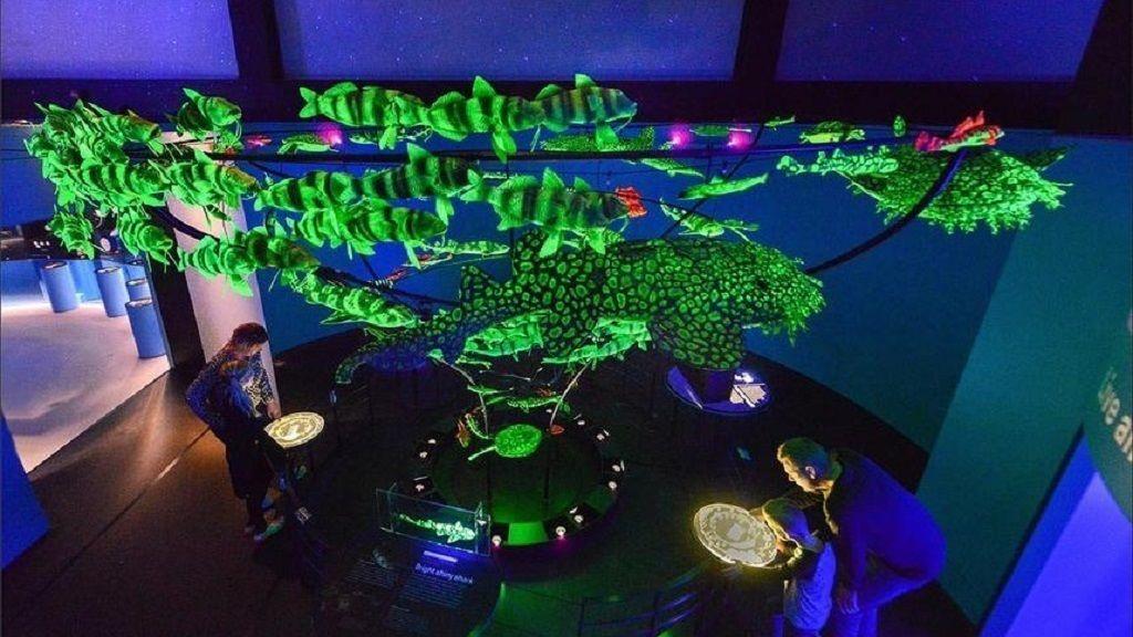 unseen-oceans-biofluorescent-marine-species_wide_1020.jpg