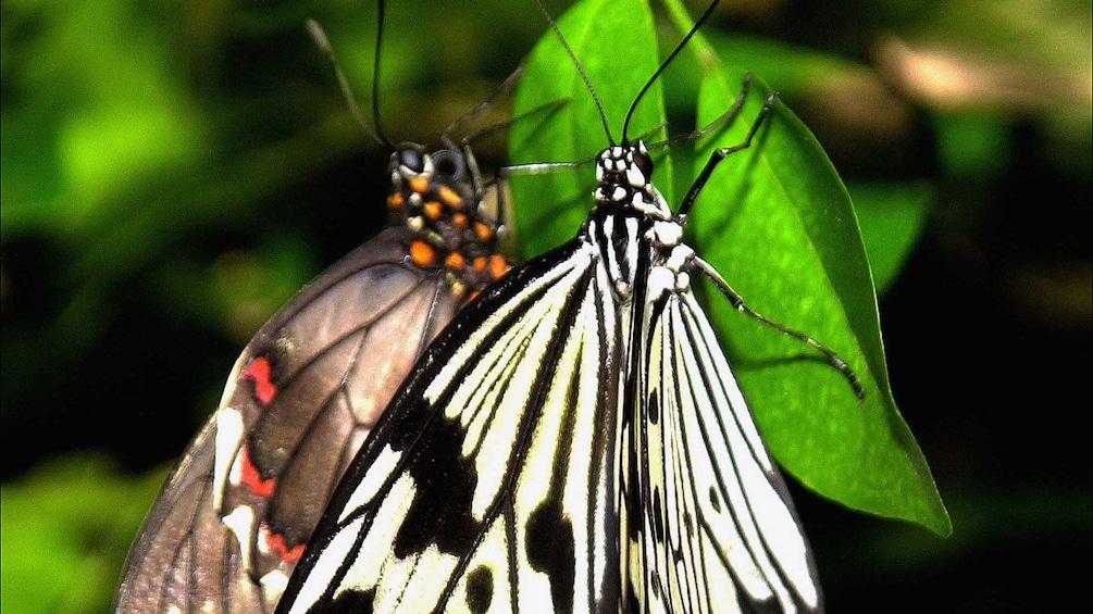 Foto 2 van 9. Close up of butterflies in American Museum of Natural History in New York