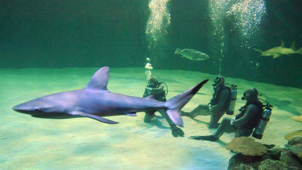 Carregar foto 3 de 5. Divers encounter sharks within the aquarium at Mandalay Bay in Las Vegas