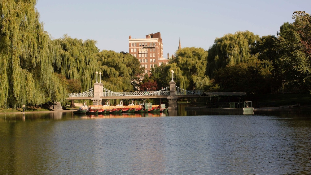 Show item 3 of 8. Public Garden with swan boats in Boston