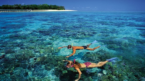 Couple snorkeling among abundant coral reefs and marine species at the Green Island Reef in Cairns