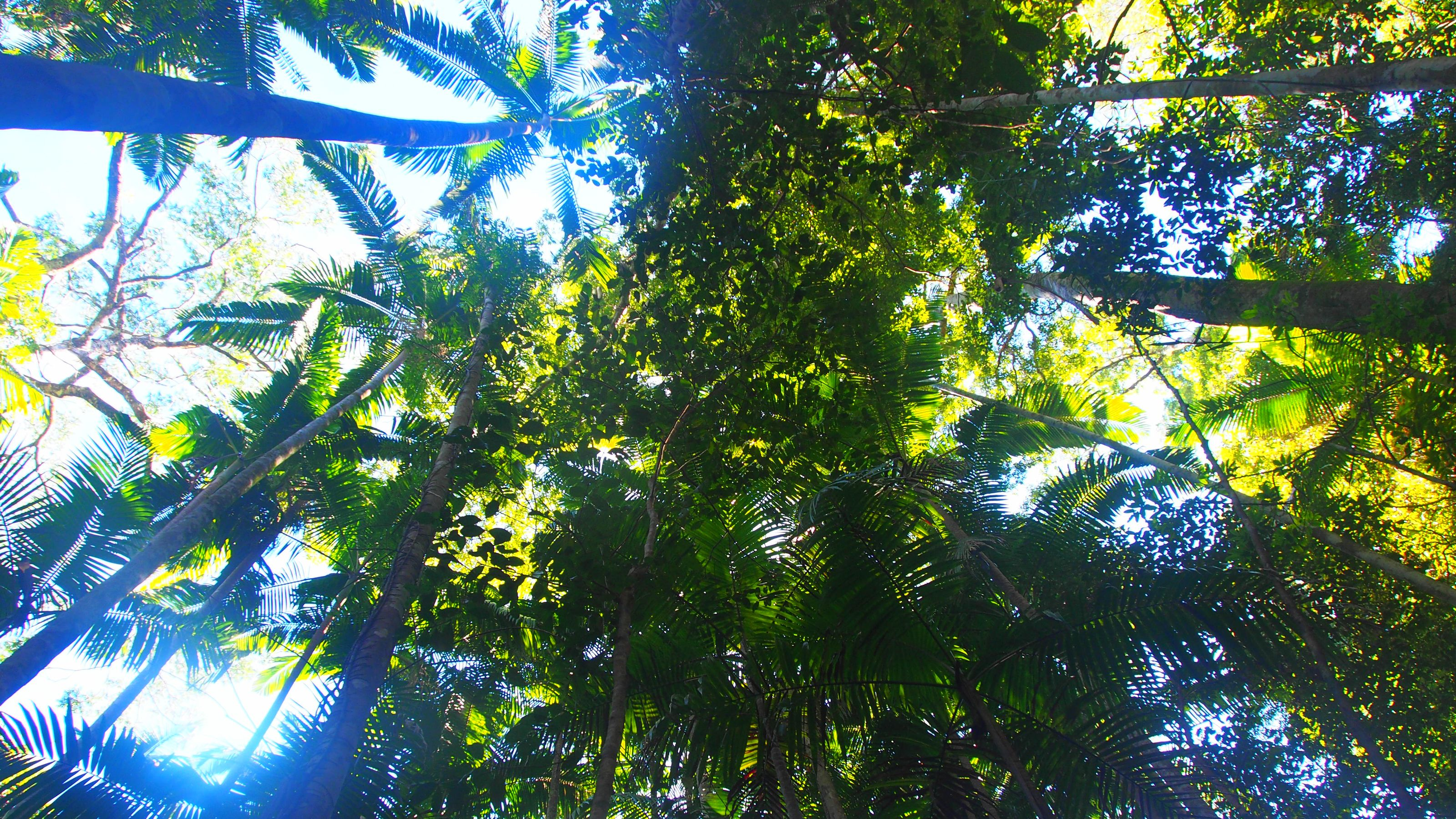 View of the lush trees on Fraser Island of the Sunshine Coast