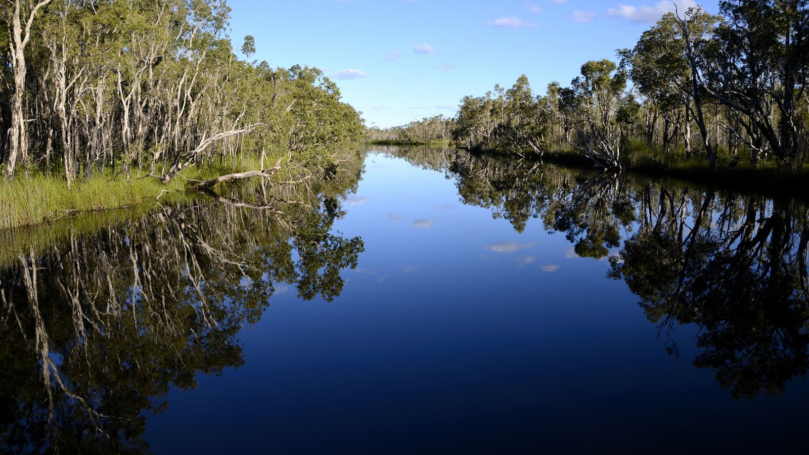 Serene view of Noosa Everglades Wilderness on the Sunshine Coast