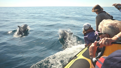 Tour boat passengers taking photos of nearby dolphins off the coast of Algarve