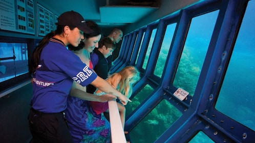 Guests admire the underwater creatures and reef at the underwater observatory in Green Island Australia
