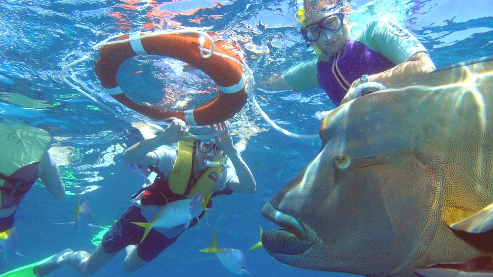 Show item 8 of 8. Guests snorkeling with fish at Green Island in Australia