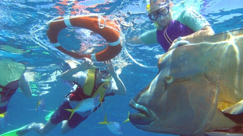 Guests snorkeling with fish at Green Island in Australia
