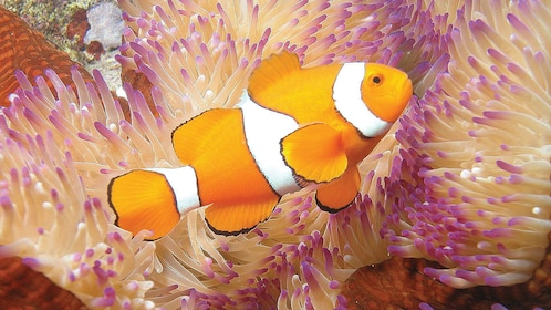 Fish at the Great Barrier Reef in Australia