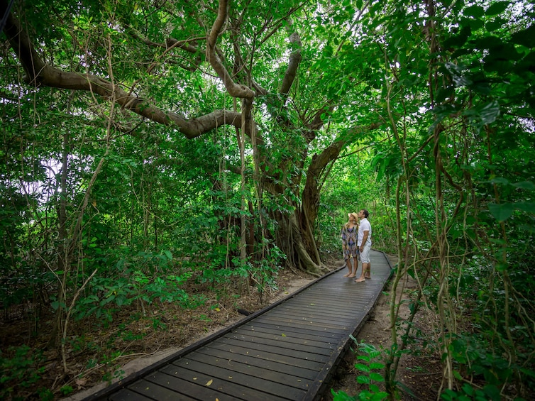Great Adventures Green Island Eco Adventure Tour
