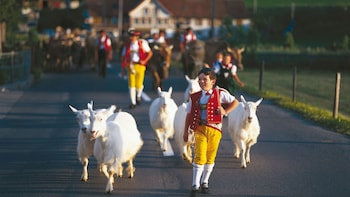 Small-Group Swiss Traditions Tour of the Appenzell Region
