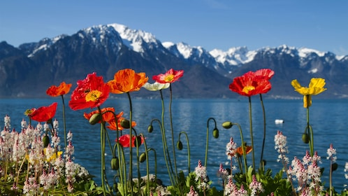 flowers and mountains in geneva