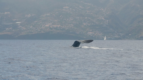Whale tail in Madeira